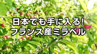 冷凍西洋すももミラベル-日本でも手に入るフランス産